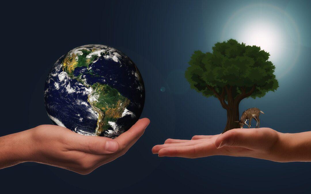 Sostenibilità ambientale: partiamo dai bambini